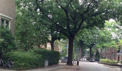 Foto Groesbeeksedwarsweg