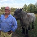 foto-paard-2 - Groepen van contracten - van Swaaij Cassastie & Consultancy - cassatieadvocaat - cassatie advocaat