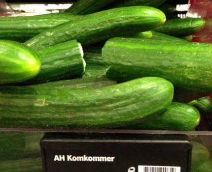 Komkommers - Of professor Brunner nog een briljante student wist  - van Swaaij Cassastie & Consultancy - cassatieadvocaat - cassatie advocaat