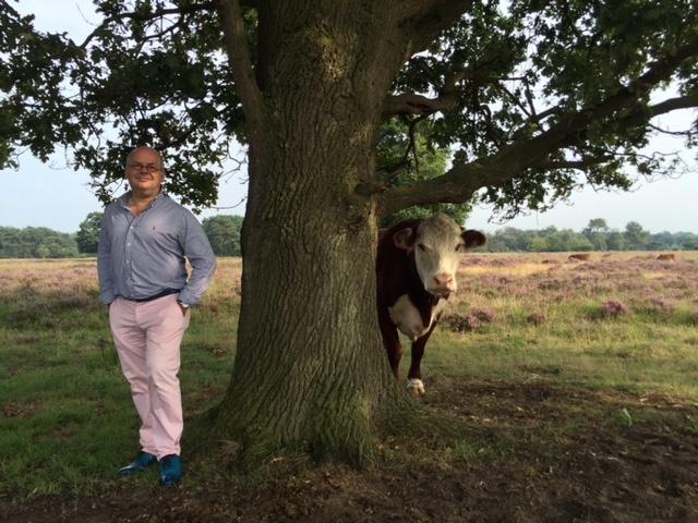 foto.Boom en koe