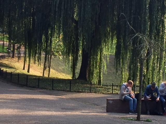 foto.Kronenburgerpark.Wilgen