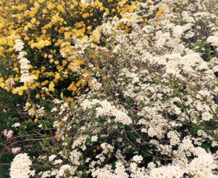 foto.Lente.2015.2