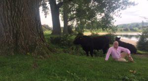 foto.Ooijpolder.koeien - Miraculeuze redding door Hoge Raad en stevige kritiek van NJ-annotator - van Swaaij Cassastie & Consultancy - cassatieadvocaat - cassatie advocaat