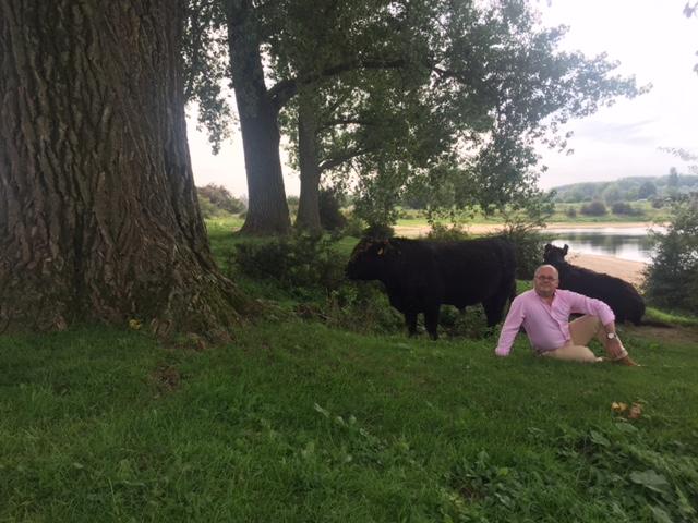 foto.Ooijpolder.koeien