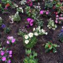 foto.bloemen - Sjef van Swaaij Sr. 85 jaar - deel 3 - van Swaaij Cassastie & Consultancy - cassatieadvocaat - cassatie advocaat