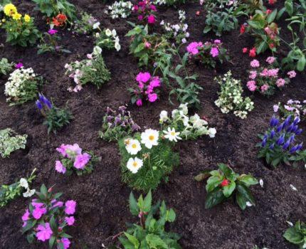 foto.bloemen - Voorbereiding - van Swaaij Cassastie & Consultancy - cassatieadvocaat - cassatie advocaat